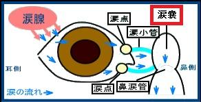 涙嚢炎/仕組み