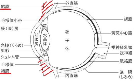 軟膏 病名 ネオ メドロール ee 瞼の腫れ、ネオメドロールEE眼用軟膏について質問です。10月下旬に左